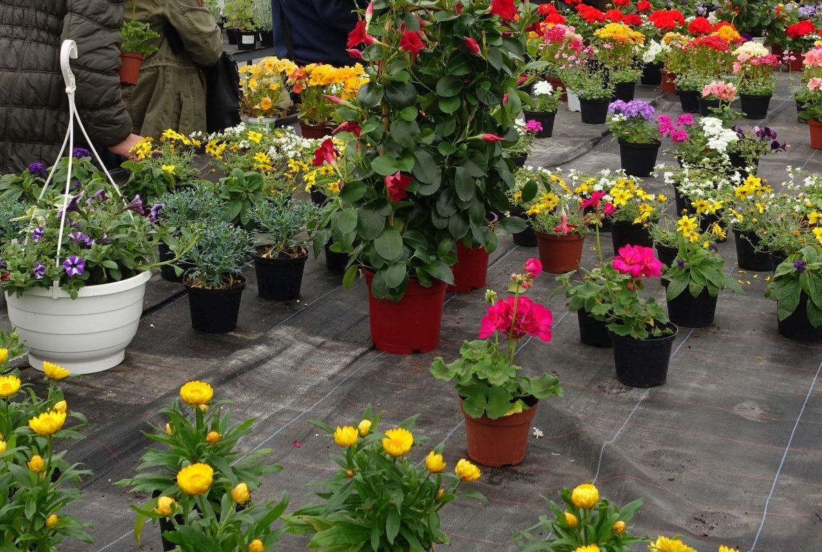 Kein Pflanzenverkauf in der Gärtnerei der Werkstatt Begatal